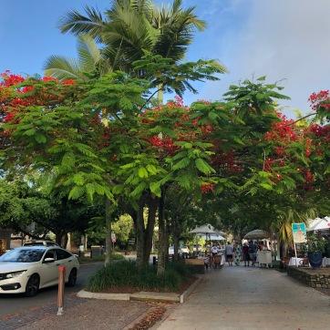 Pretty Noosa Streets