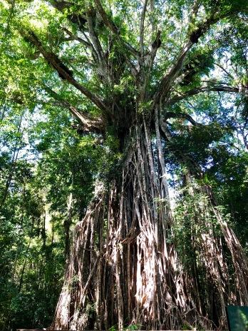 """""""Avatar"""" Tree"""